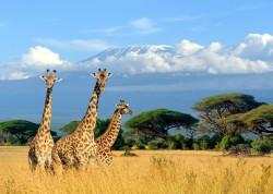 Kilimanjaro .jpg